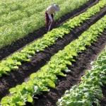 農業の画僧(農夫と畑