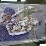パソコン画像(プラシチックを食べた鳥と受講者)